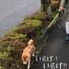思わぬお散歩…