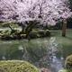 「金澤桜百景」蔵出し写真(その5)