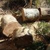 伐木引取り2回目の午後 持ち帰り回収は後日 Collecting logs the second time, in the afternoon