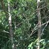 昆虫採集記録4日目 念願のクワガタ!
