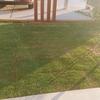外構を考える~第15回「芝の具合とガオるイチイの木」