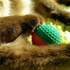 【にゃんたま】世界一愛らしい球体 猫のき〇たまをひたすら集めた