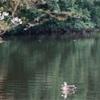 【写真】最近の写真撮影(2017/4/8)明石公園その2