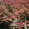続々・江戸の風情と紅葉色づく「小石川後楽園」