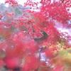 三溪園~みなとみらいフォトウォーク|X-Pro2 × GR