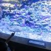 【えのすい】水族館とレッドロブスターに行ってきた♡
