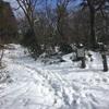 二つめの百山を登った1月2日。