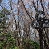 【日本百名山】天城山