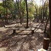 佐波の里山・きずなの森でクワガタ幼虫を割木採集