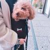 尾道で愛犬と一緒に食べ歩き〜人気の尾道グルメまとめ〜