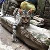 犬の多いカトマンズでアサンチョークを探検しに行ったら猫に出会った(世界の猫探し65匹目)