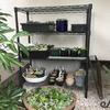 多肉植物の鉢が増えています。棚が必要になりました!!