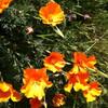 春のお花とお気に入りのお店