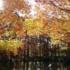 晩秋の大阪長居植物園