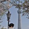 桜とサクラトレインと…の撮影