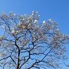 リハビリライド:春の気配の観音崎