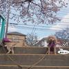 桜がきれいな入学式