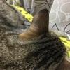 猫の満足バロメーター