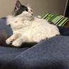 【猫ブログ】ココとIKEAのベッドの関係