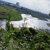 〈其の4〉〝多摩川〟のタマの由来は?