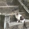 猫さん日和な今日のお散歩。