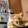 【動物保護を考える】網戸を登ってきた猫と、一緒に生活することになりました。