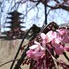 あおによし奈良の都は・・・