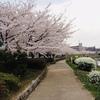 新元号と桜と東京について