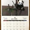 自分で撮った写真で2019年カレンダーをつくってみた。