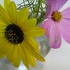 夏の花、秋の花