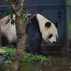 ぐるっとパスを使って恩賜上野動物園へ行ってきた【2017.10.07】