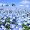 ネモフィラ〜青の世界〜