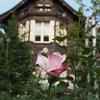 現代の迷い家浪漫!世田谷区で目撃される幻の洋館
