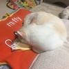 ブラシを抱いて眠るライチ