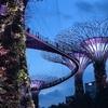 シンガポール観光!--建築『スーパーツリー』のイルミネーションが綺麗すぎた、、【ガーデンズバイザベイ】