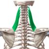 【肩こりの原因】ストレッチだけじゃ肩こりが解消しない理由【筋肉の硬直とは?】