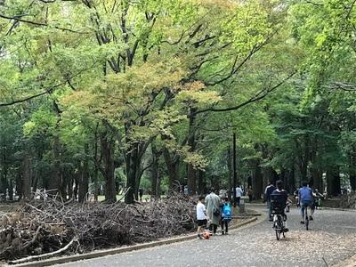 代々木公園ランニング〜1ヶ月ぶりに走りました〜