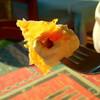 ギリシャに行ったら、あま~いスイーツ・バクラヴァを食べてみて