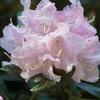 御岩神社は花盛り