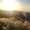 黄金色の絶景!岩湧山にススキを観に行こう!