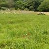 「マダム倶楽部」活動報告  草原の中の紅二点 6月20日