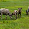 水牛の家族を見ながら走るのも楽しそうですね。