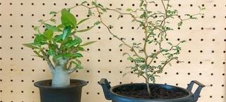 植物を増やしました