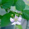 ご近所の花々-2 05/04