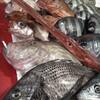 本日の漁港直送の魚たちo(^o^)o