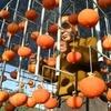 高級な干し柿 芹生柿(熊本県)