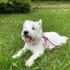 大阪・北摂 犬とお散歩できる公園