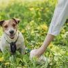 犬のフンのDNA鑑定:公共の場を汚した犯人探しに活用!  (RTE-News, Apr 26, 2021)