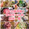たにログ145 【ダブり買い防止】多肉の別名一覧