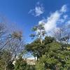 うれしい青空、年の瀬の金沢。